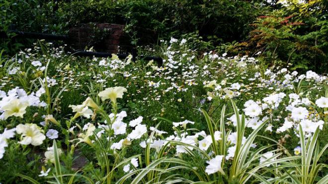フランス山に咲いていた白い花