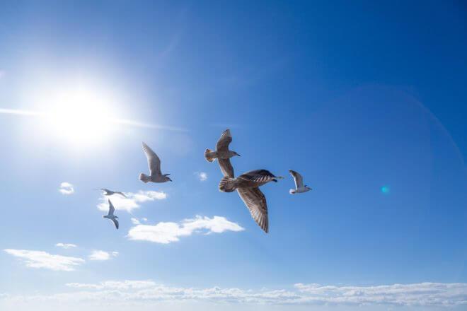 青空を飛んでいく鳥の群れ