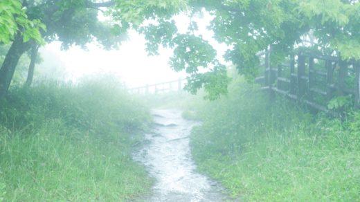 霧と緑に包まれた道